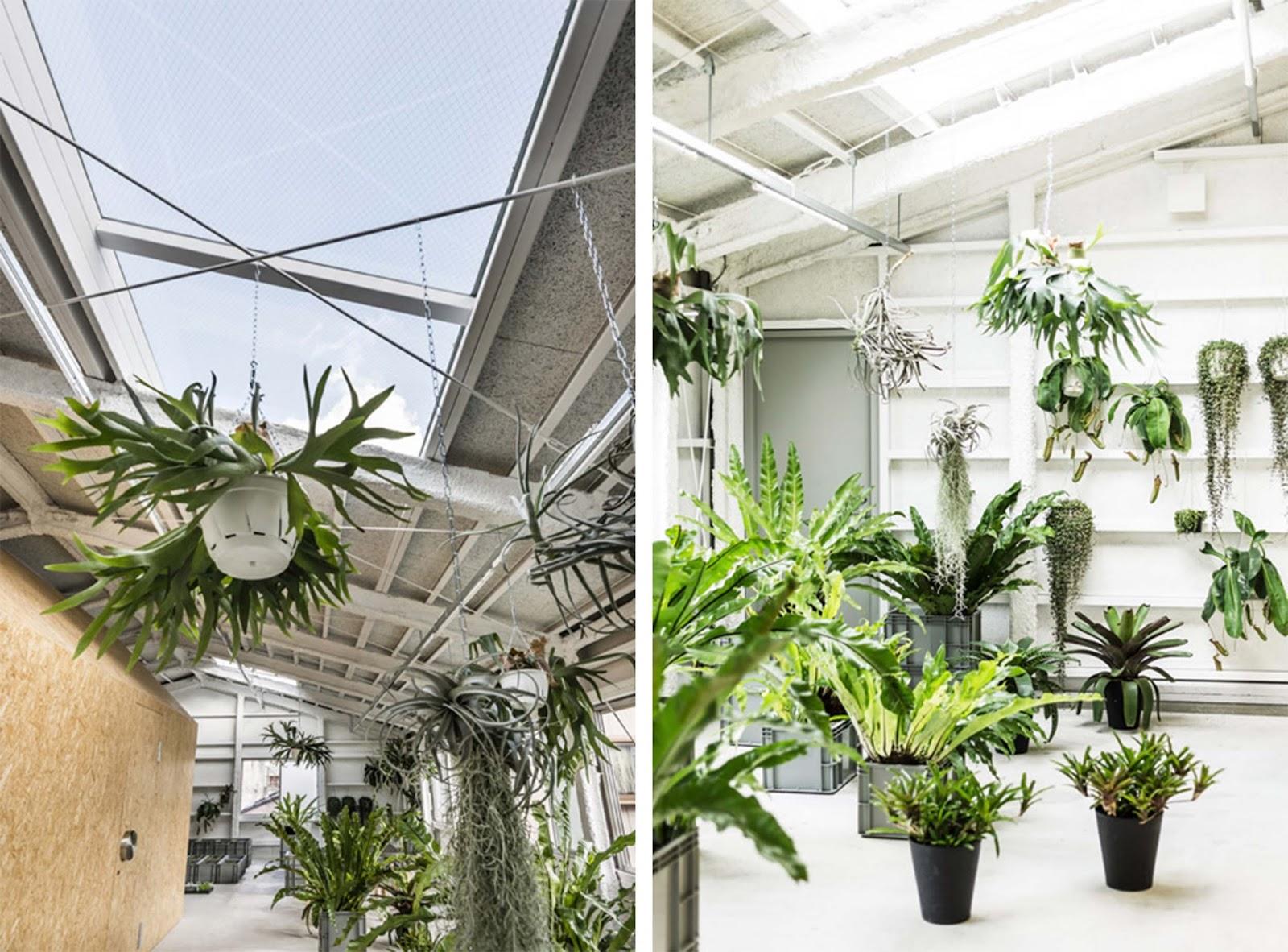 Piante indoor for Piante verdi interno