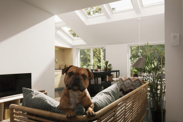 interno con cane